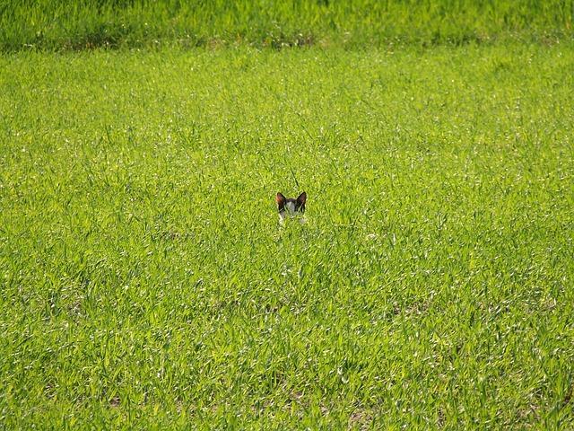 Cat hiding in grass